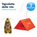Trappola L.Botrana a 2 feromoni
