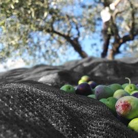 Foto Rete per olive Nera 95 gr./m2